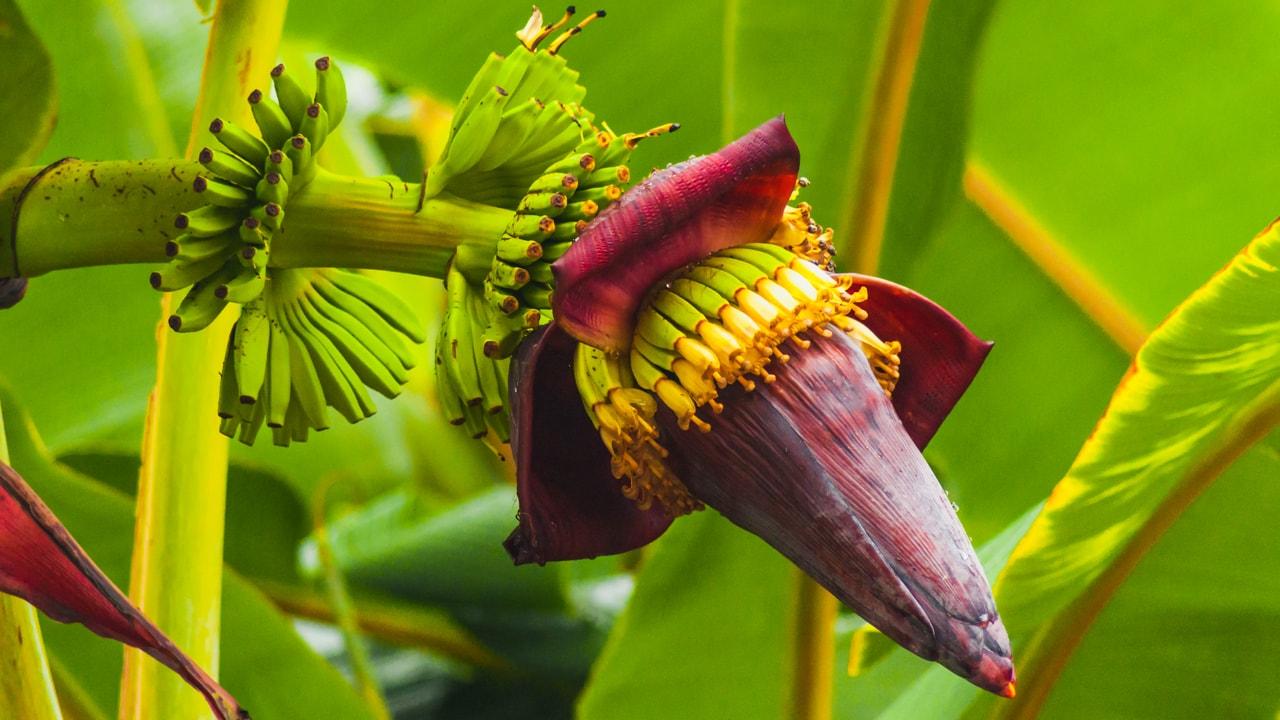 цветы в картинках банан самые